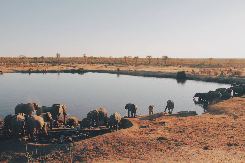herd of elephant drinking water from lake photo