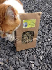 Organic Catnip w Bisou Ithaca Soap http://www.17thcenturysuds.com/products/andys-powerful-catnip-animal-care