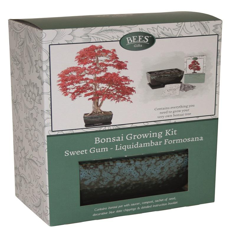 Bonsai Sweet Gum Growing Kit