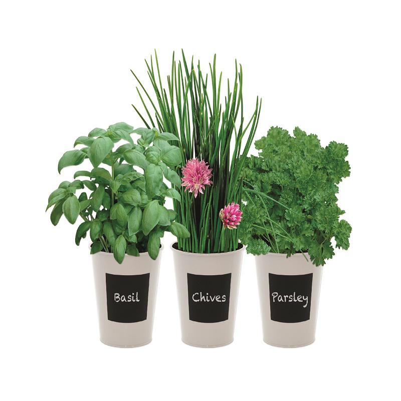 Indoor Flavours Trio Herb Set