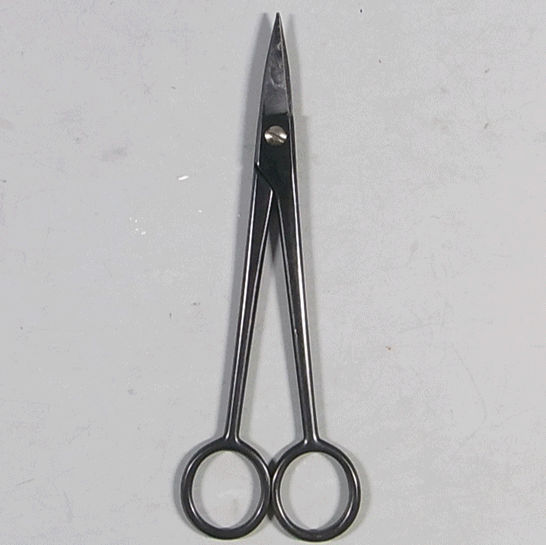 Scissors (for White Pine Buds)