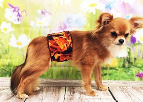The Dog Belly Band® Male Dog Diaper On Fire Washable