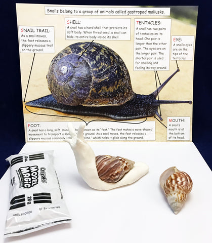 Snail science activity