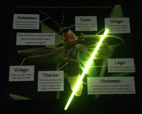 Science Activity - Learn about Fireflies Inspired by The Very Lonely Firefly by Eric Carle