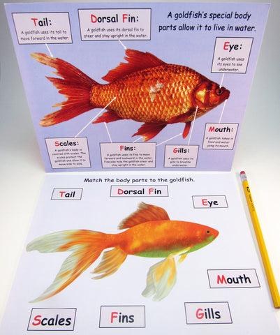 Goldfish Body Parts: Science Activity inspired by A Fish Out of Water by Helen Palmer