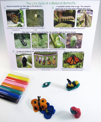 Clay Model of monarch butterfly life cycle - Ivy Kids Educational Activity Kit featuring the book Gotta Go! Gotta Go! by Sam Swope and over 10 art, literacy, math, and science activities inspired by the story. Learn about monarch butterflies. Perfect kit for spring.