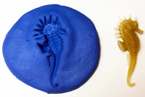 Clay imprints of sea creatures