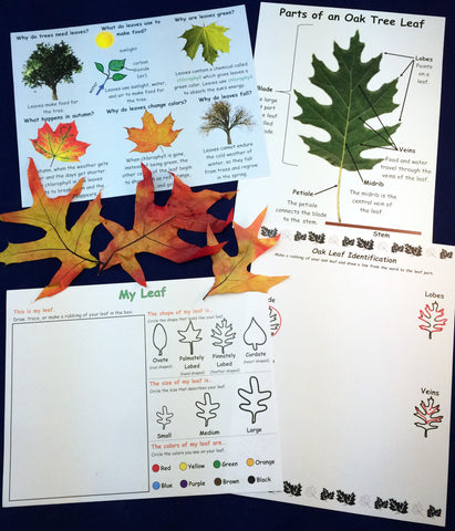 Science activity - exploring and observing oak tree leaves inspired by the book Leaves by David Ezra Stein