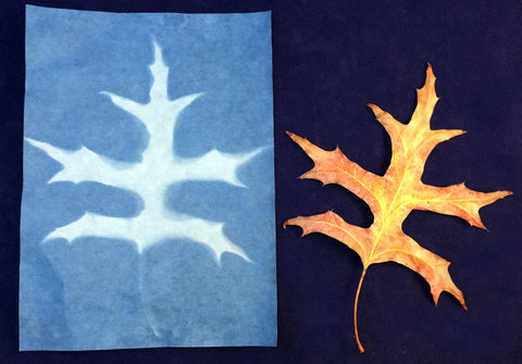 Science activity - Leaf print on sun sensitive paper inspired by the book Leaves by David Ezra Stein