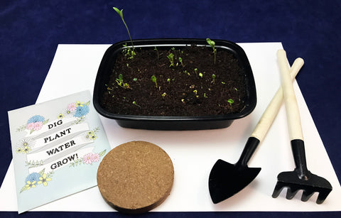 Plant your own garden children's activity garden tools kids wildflower seeds