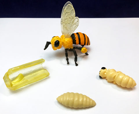 Bee life cycle figures