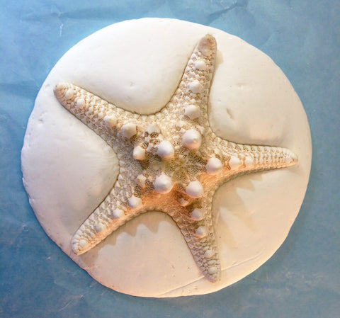 Science and art activity inspired by the book Over in an Ocean in a Coral Reef. Use sea creatures, starfish, and seashells to make clay imprints