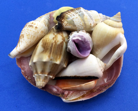Science activity inspired by the book Over in an Ocean in a Coral Reef. Exploring seashells.