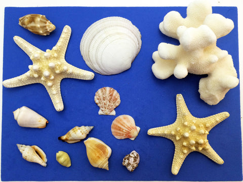 Science activity inspired by the book Over in an Ocean in a Coral Reef. Exploring starfish, coral, and seashells.