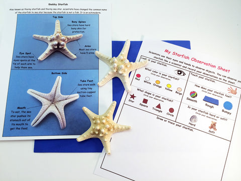 Science activity inspired by the book Over in an Ocean in a Coral Reef. Exploring seashells and recording observations.
