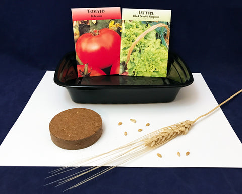 Plant tomatoes, lettuce, wheat grains crops science activity Farm theme kids