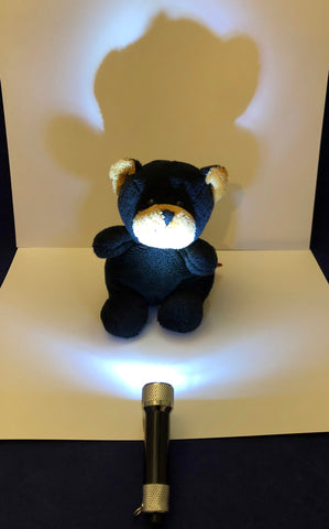 bear shadow experiment for kids