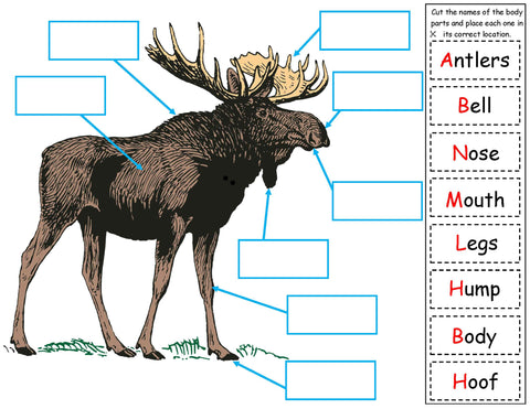 Body parts of a moose kids science