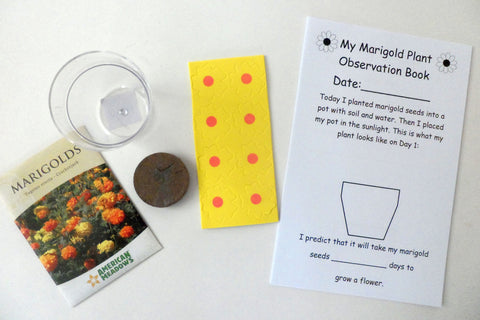 The Tiny Seed - Planting Marigolds {Kid Science}