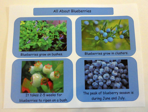 Blueberry facts - Blueberries For Sal by Robert McCloskey - Ivy Kids subscription box activities.
