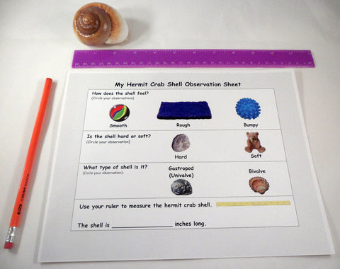 Observation activity - A House for Hermit Crab - Ivy Kids subscription box activities.