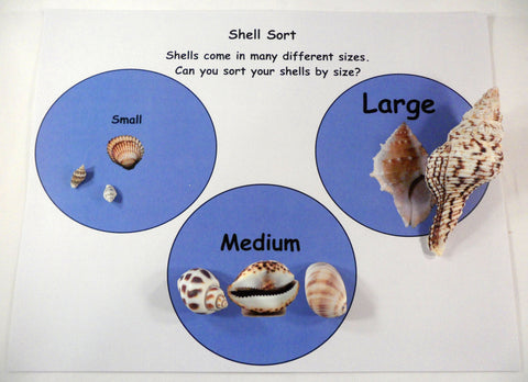 Comparing shells - A House for Hermit Crab - Ivy Kids subscription box activities.