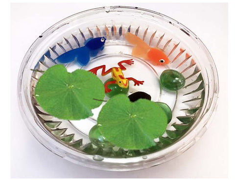 Grow Your Own Lily Pad Pond