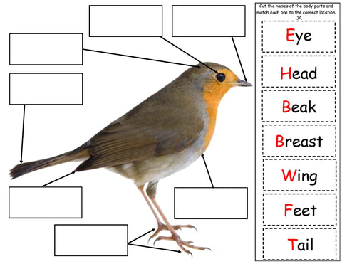 All about birds science fact board for kids