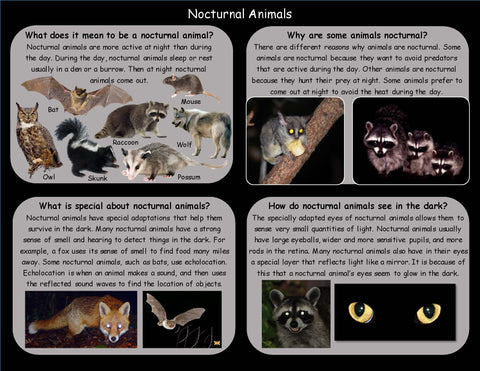 Learn facts about Nocturnal Animals