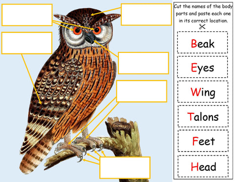 Science Activity - Label the owl body parts