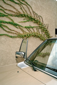 Mahala Nuuk - Vintage Car and Climbing Plant, 2015