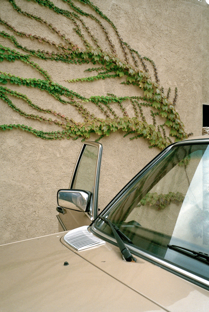 Mahala Nuuk – Vintage Car and Climbing Plant, 2015