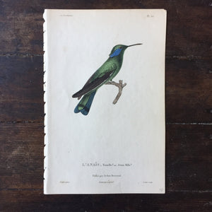 Antique Hummingbird Print L'Anais Pl 57