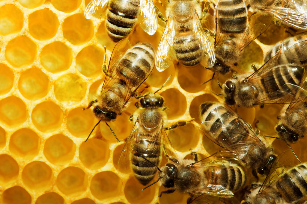 Is propolis better than honey?