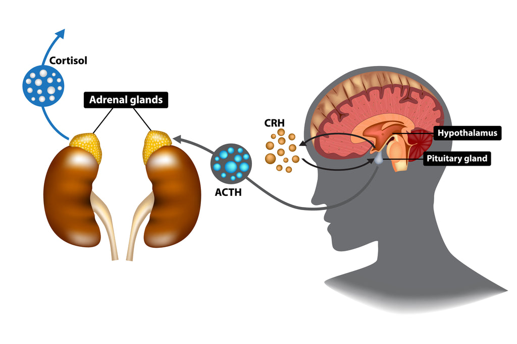 hypothalamic-pituitary-adrenal axis, adaptogens helping with stress and depression