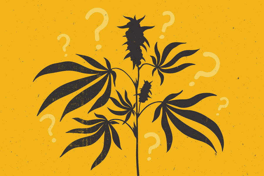 5 Questions to ask before buying CBD