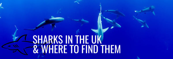 Sharks in the UK and Where to Find Them