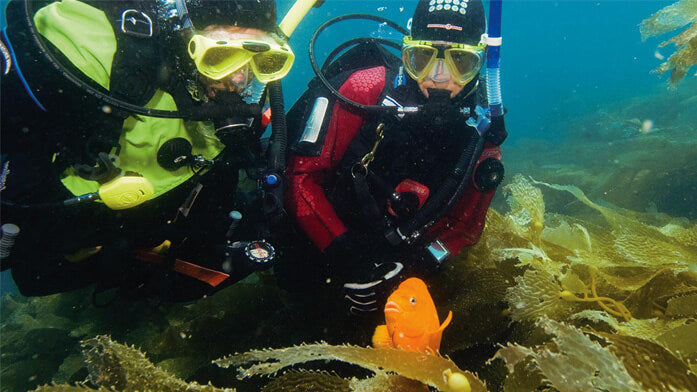 PADI Dry Suit Diver E-Learning Course
