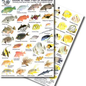 Fish Identification Slates