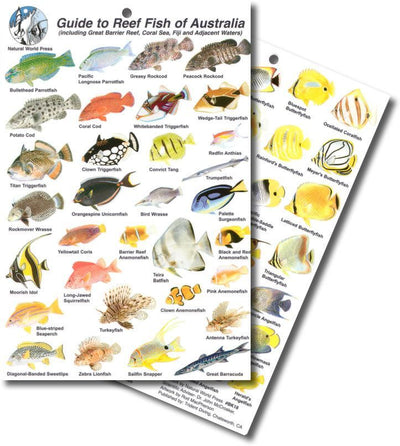 Fish Identification -SlatesAustralia - Mike's Dive Store - 5