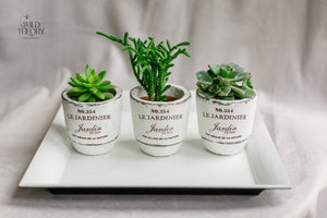 Trio French Pot Assorted Succulent on White Tray