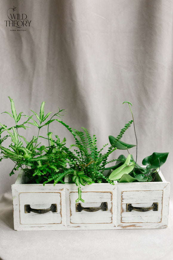 Antiqued White 3 Wooden drawers,  filled with fern and/or tropical assorted plants