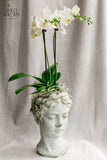 Concrete Head with small orchid plant (Large)