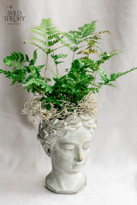 Concrete Head Planter with Fern (Small )