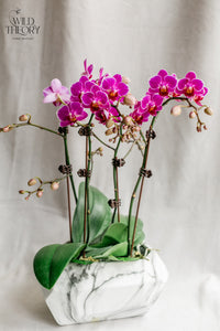 Marble Finish Dolomite Pot with mini orchid plants