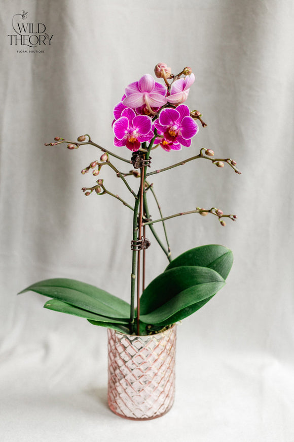 Pink Mercury vase with mini orchid plant