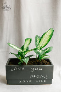 Personalize – Matte Black Rectangular with small Dieffenbachia plants