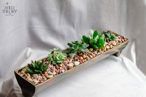 Gold Metal Assorted Succulent Tray
