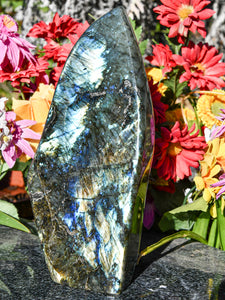 Polished Labradorite Standing Display Freeform