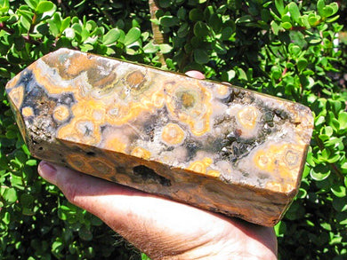 Polished Rare Large Fossil Ocean Jasper Crystal